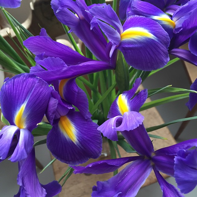 Iris flowers, home sweet home